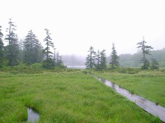 霧の木道.jpg